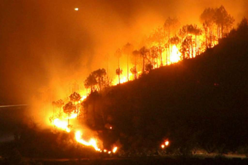 Amazon Forest Fire Tragedy