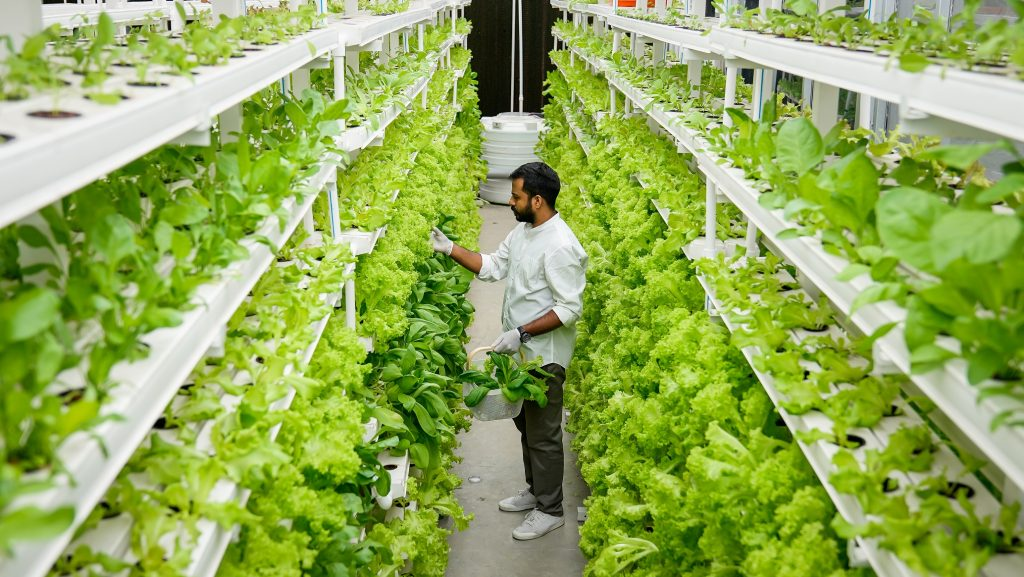 Vertical Farming: An Innovation in Agricultural Industries