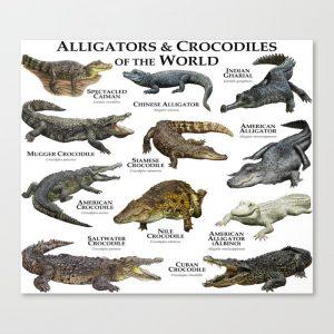 Widespread Crocodiles